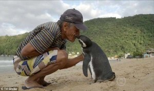Pinguin Bertemu Joao/Copyright: Globo TV