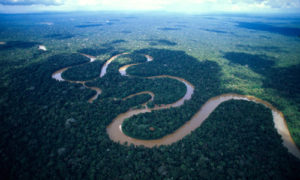 Hutan Amazon/Foto: Unik6.Blogspot